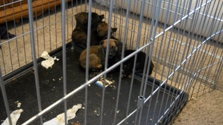 Police investigating animal cruelty after puppies found dead at Monroe home
