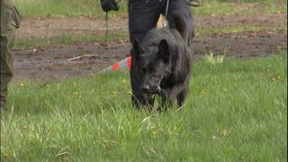 Bit bystanders want local police K9s trained to bark, not bite