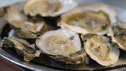 A woman died after contracting vibriosis after consuming raw oysters during a trip with family and friends. (Neilson Barnard/Getty Images for the New York Culinary Experience)