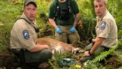 Emergency crews responded around 11:20 a.m. Saturday to a mountain lion attack in foothills near North Bend.