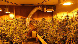 Six suspected pot grow houses raided, suspects arrested in Pierce County