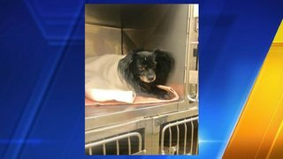 Dog struck on I-5 in Tumwater, State Troopers searching for owner