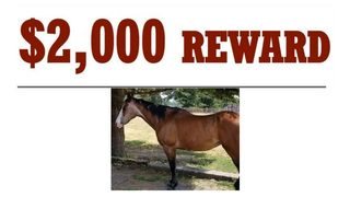 $2,000 reward offered after horse found with tongue cut in Thurston County
