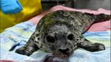 VIDEO: Seal pup to be released
