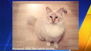 8th cat killed in Thurston County