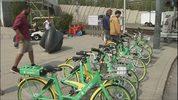 Lime bikes, file photo.
