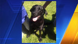 This undated photo provided by Lisa Christon shows the dog allegedly shot by Oregon man Josh Horner. (Lisa Christon via AP)