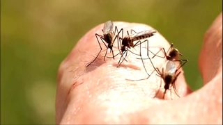 VIDEO: Seattle woman first to contract West Nile in King County