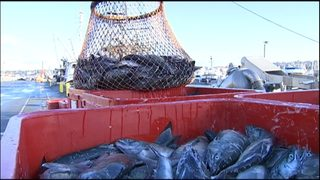 VIDEO: Seattle city leaders appealing to federal government to protect salmon in Alaska