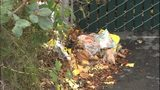 VIDEO: West Seattle business dealing with trash being thrown on their property