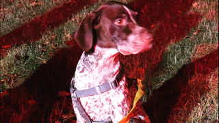 Dog found in basement of burning home in Kent; owner sought