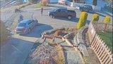 VIDEO: Neighbors chase down package thieves