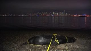 Two more sea lions confirmed shot and killed; brings total to 12