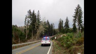 PHOTOS: Powerful winds bring down trees across Western Washington
