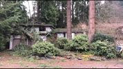 Photo shows a tree that fell on a house in Edmonds. KIRO 7's Joanna Small says nobody was at home when the tree fell.