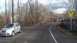 WATCH: Dash cam video captures tree fall on Bellingham roadway