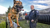 Tacoma Police canine officer Tyler Meeds and his dog Zeus during a training session at TPD headquarters, January 15, 2019. (Peter Haley/The News Tribune)