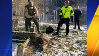 Special rescue performed to save deer from icy pond