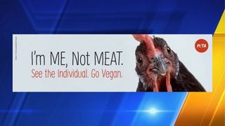 PETA to place billboard near site where semi carrying chickens crashed on I-5