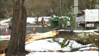 Snowstorm aftermath: Hundreds of trees down around Seattle and prime landslide conditions