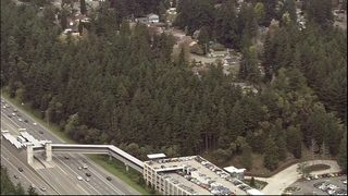 Thousands of trees will be cut to make way for Lynnwood light rail