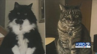 KIRO 7 viewer helps family find cats that were inside SUV stolen from Tacoma restaurant