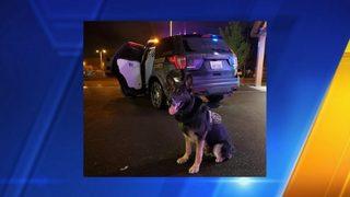 K-9 Jaxx leads Thurston County deputies to hit-and-run suspect