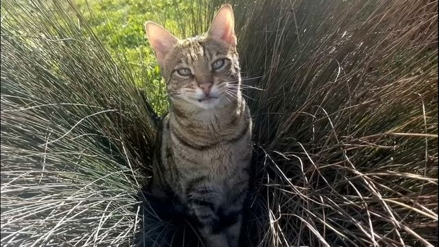 Bellevue cat at center of lawsuit against city, King County