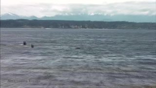 RAW VIDEO: Killer whales seen close to shore at Richmond Beach