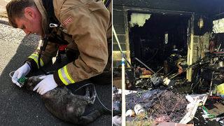 Woman, cat injured in Lynnwood fire