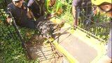 VIDEO: 13-year-old black lab rescued after falling down steep ravine in Lakewood