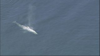 RAW: Gray whale spotted near Everett