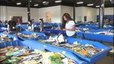VIDEO: Goodwill provides teachers with free books