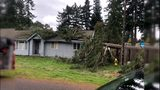 VIDEO: Tree crashes onto Lakewood home during windy weather
