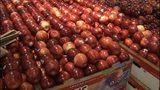 VIDEO: New apple variety Cosmic Crisp hits the shelves